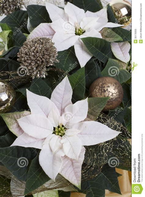 decorated winter rose stock photo image of decoration