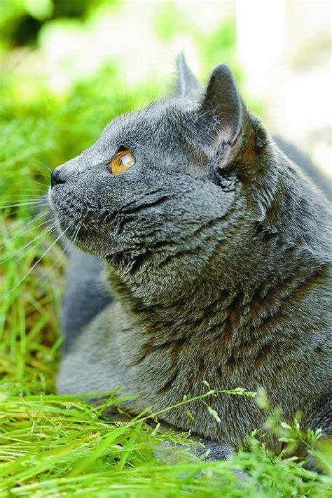 alimentazione gatto anziano il gatto anziano salute e benessere gatto