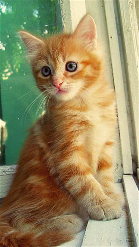 Cat Ct010 Brown Yellow orange tabbies make me smile cats baby and make me smile