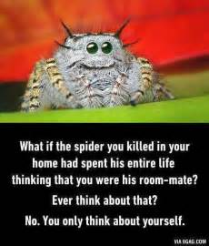best 25 spider meme ideas on pictures of