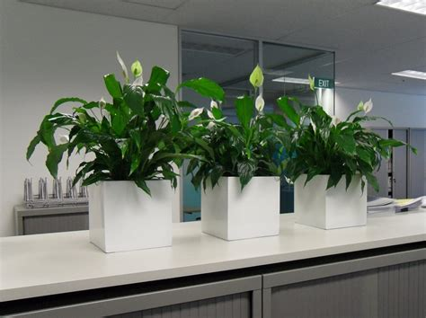 best plants for the office gallery pictures of indoor plants gaddys plant hire