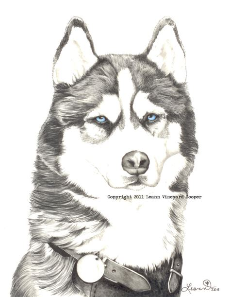 husky puppy drawing items similar to husky drawing print quot husky quot on etsy