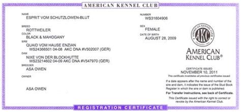 how to akc register a puppy without papers esprit vom schutzlowen blut akc rottweiler registration papers