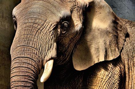 Rest Zoologischer Garten Basel by Elephant Up At Zoo Basel In Basel