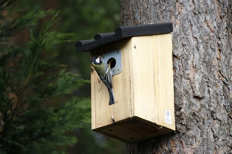 Outside Bird Feeders Ideas For Outdoor Bird Feeders Maximum Marketer