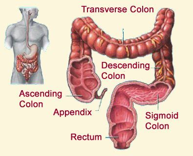 colon sections moira colonic clinic