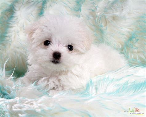 baby and puppy pictures white baby wallpaper 15323
