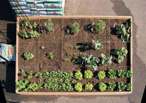 what to plant in raised garden beds raised bed and container gardening chuck hafner s