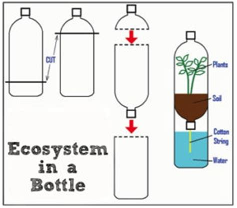 How To Make A L From A Bottle by Earth Day Activity Build A Biosphere In A Bottle Expect