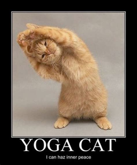 Funny Yoga Memes - a fun look at yoga