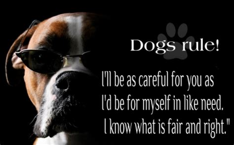 dogs rule dogs rule dogs animals background wallpapers on desktop nexus image 1598290