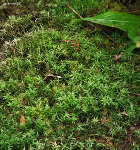 different kinds of mosses