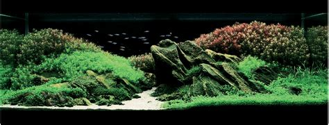 biotope aquascape the strange and serene beauty of aquascapes 171 fashionsphinx