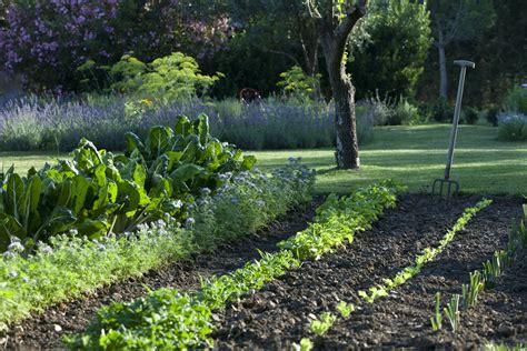 comment organiser jardin potager le du potager