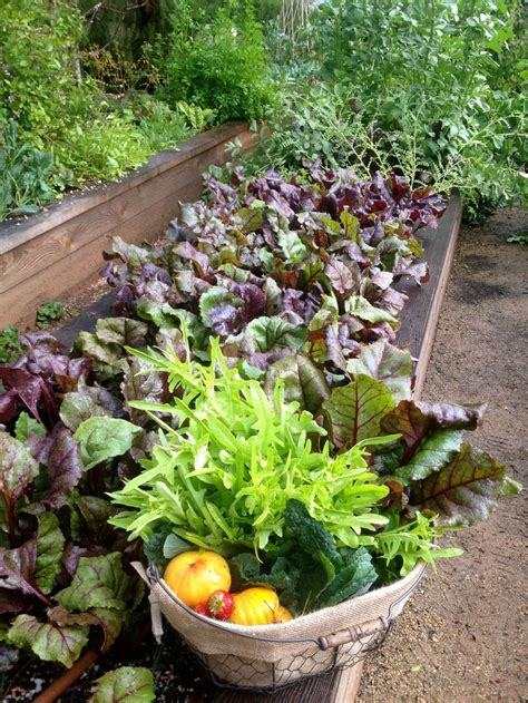 edible gardens 17 best images about gardening on gardens