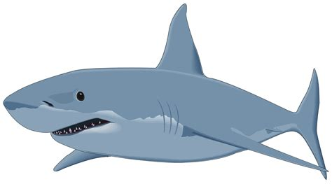 Great White Shark Clip by Shark Clipart Transparent Background Pencil And In Color