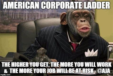 Corporate America Meme - business chimp imgflip