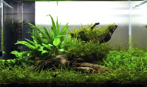 java moss aquascape does anyone have pics of a scape using only java moss and