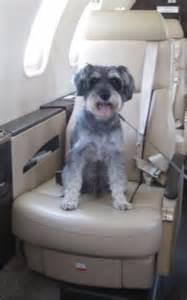 Can Dogs Fly In Cabin by Class Fido Dogs Get Their Own 163 1 250 Seats So They