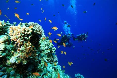 blue dive diving and snorkeling in dahab