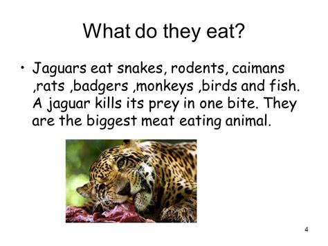 what does a jaguar eat jaguars by ella smith ppt