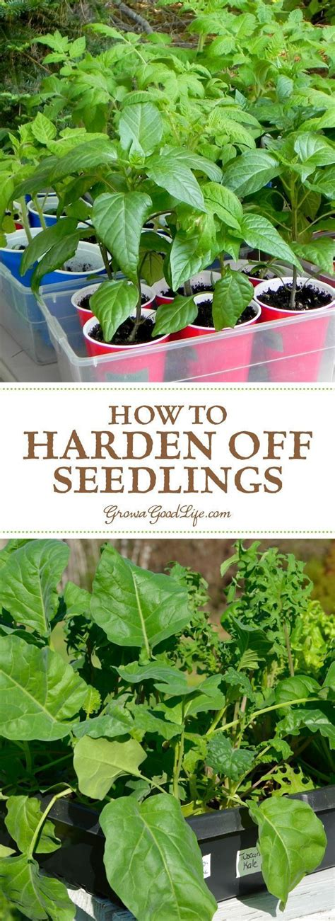 grow your own hrt sprout hormone rich greens in only two minutes a day books 1603 best images about garden stuff on grow