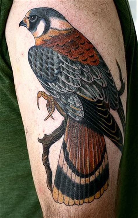 kestrel hawk tattoo and american kestrel on pinterest