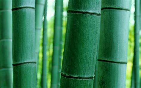 bambo nature bamboo nature macro wallpaper 1680x1050 29151