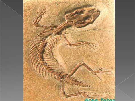 imagenes de fosiles los fosiles