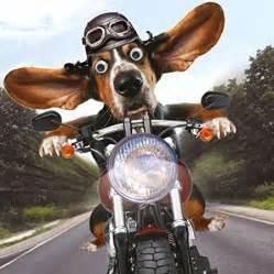 basset hound birthday card easy rider goggly moving motorbike ebay