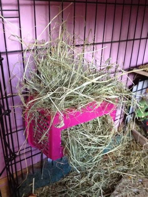 How To Make A Hay Rack For Guinea Pigs by Basket Rabbit Hay Rack Petdiys Could Also Work For