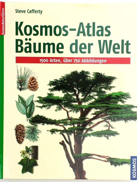 Teuerster Bonsai Der Welt 5077 by Teuerster Bonsai Der Welt Eindr Cke Einer Japanreise 1994