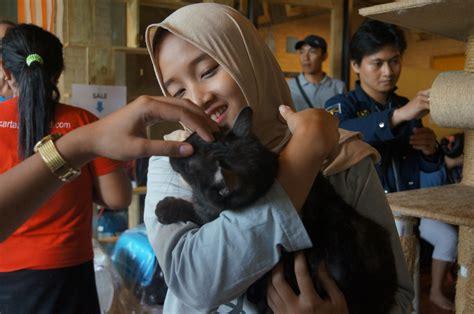 cat adoption day   cat cabin jakarta animal aid