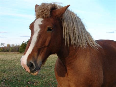 cute hairstyles for horses cute horse but bad haircut not nice to make your horse