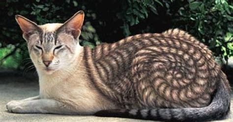 paint like cat from quot why paint cats quot picture gallery this cool cat seems