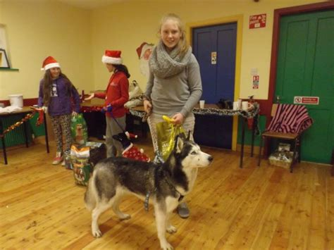 rescue equines steal the show at ballinamore hungry dog show fundraiser for hungry horse outside hungry