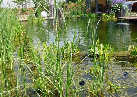 Klares Wasser Im Teich 1420 by Schwimmteich Klares Wasser Im Teich Zeolith Und Skimmer