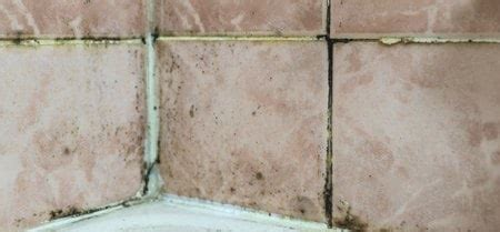 black mold growing in the bathroom here s what to do