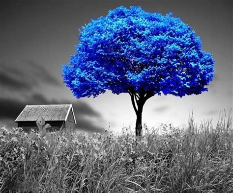 beautiful blue color pinterest image 2176764 by lauralai on favim com