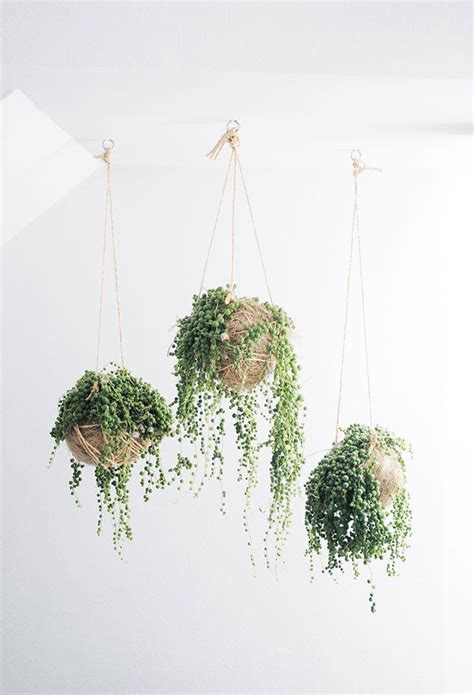 low light hanging plants indoors 17 best ideas about bathroom plants on pinterest cool