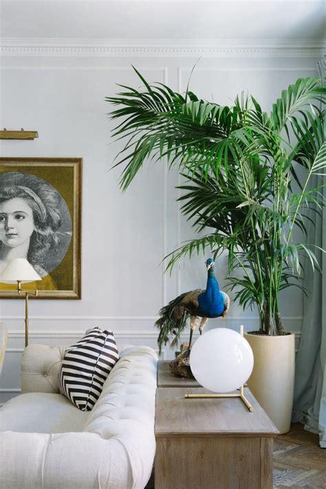 goldfruchtpalme wohnzimmer 50 besten zimmerpflanzen ideen bilder auf