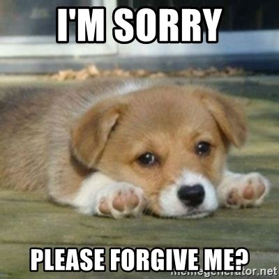 Im Sorry Meme - i m sorry please forgive me sad puppy face meme generator