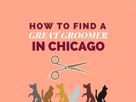 buy a puppy chicago how to find a great groomer in chicago cruisin canines