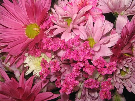 Wedding Flower Pictures Pink by Pink Daisies Wedding Bouquet Jpg