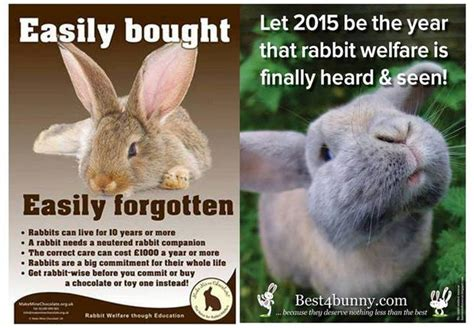 rabbit in new year 2015 new year 2015 animal rabbit 28 images zodiac sign clip