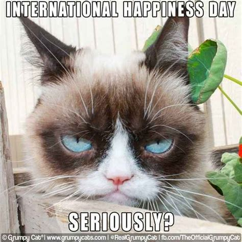 Make A Grumpy Cat Meme - community post 14 hilarious grumpy cat memes that will