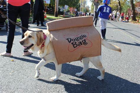 adorable diy halloween costumes  pets