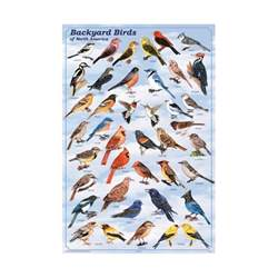 backyard birds of north america poster north american