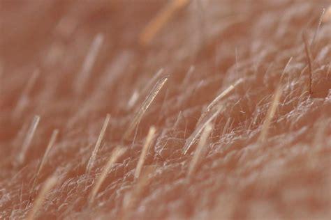 puvic hair pics pubic peach fuzz boys newhairstylesformen2014 com