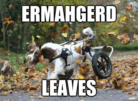Ermahgerd Animal Memes - ermahgerd animal meme